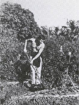 Harry Mulisch op een suikerplantage in Cuba.