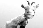 tandplak is nationale-zondebok