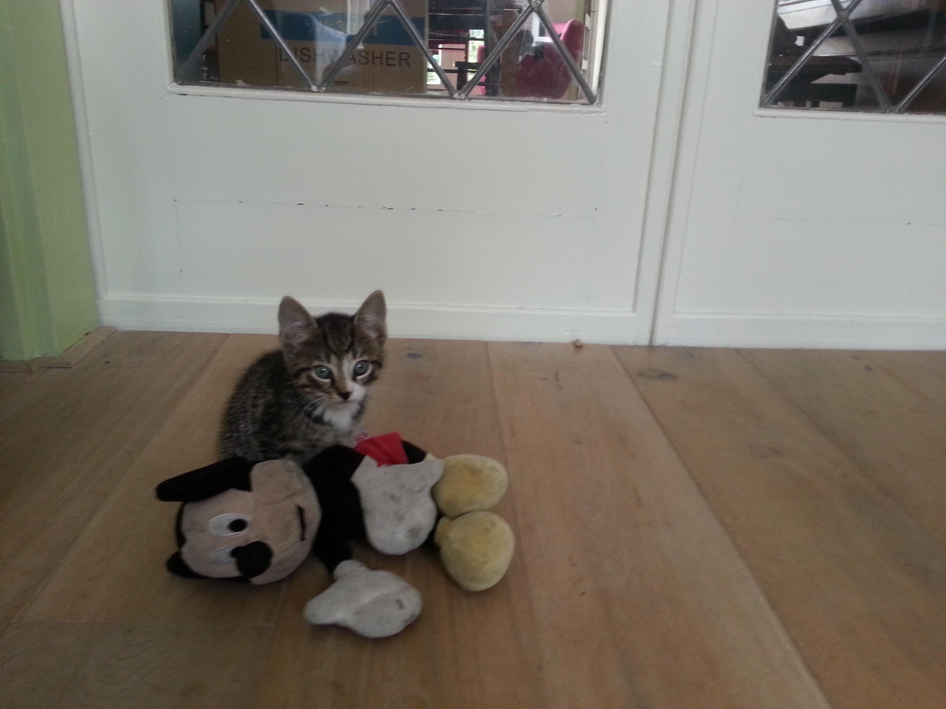 Tijger en Mickey
